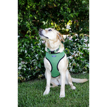 Load image into Gallery viewer, Pet Harness Embroidered - Green
