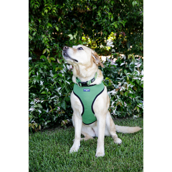 PET HARNESS Green - Embroidered