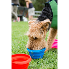 Load image into Gallery viewer, Collapsible Drinking Bowl LARGE