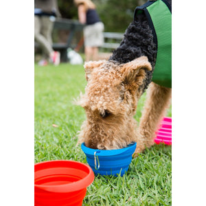 Collapsible Drinking Bowl LARGE