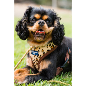 Pet Harness Embroidered - Leopard