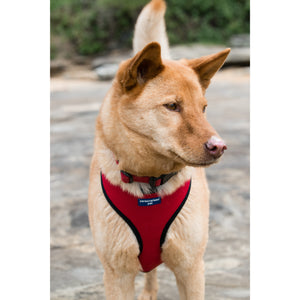 Pet Harness Embroidered - Red