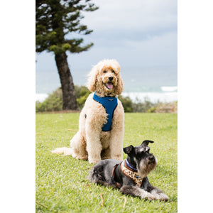 Pet Harness Embroidered - Royal Blue