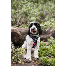 Load image into Gallery viewer, Pet Harness Embroidered - Paw Print Multi