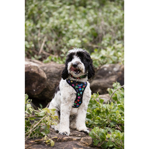 PET HARNESS Paw Multi - Embroidered