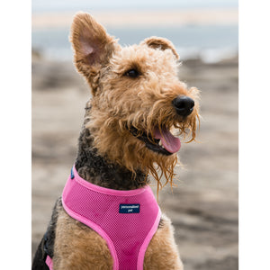 Pet Harness Embroidered - Dusty Pink