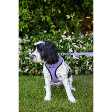 Load image into Gallery viewer, Pet Harness Embroidered - Purple