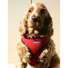 Load image into Gallery viewer, Pet Harness Embroidered - Red