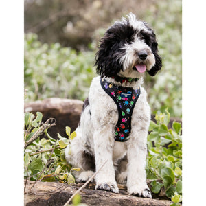 Pet Harness Embroidered - Paw Print Multi