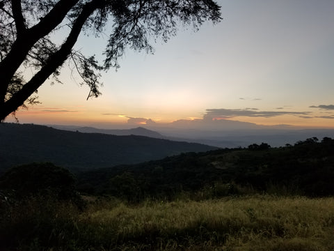 ethiopia sunset in coffee growing lands