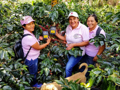 Colombian women farmers pose in coffee trees with bags of Groundwork Coffee Fuerza Femenina