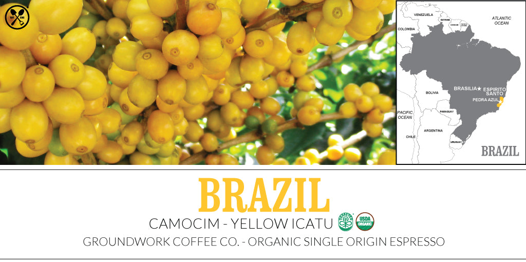 Groundwork Coffee's Bazil Yellow Icatu Single Origin Espresso Brew School