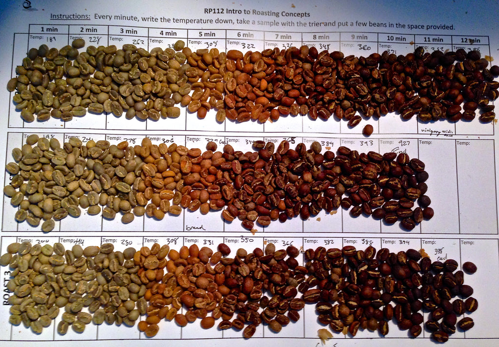 Stages of roasting coffee beans.