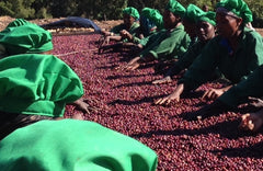 ethiopian women process red coffee berries in METAD gedeb