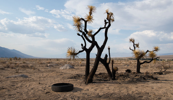 Photo of Joshua Trees by Juliet Deissroth