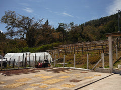 Drying coffee patio, Los Planes, El Salvador