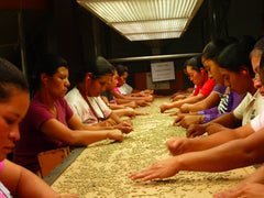 Hand sorting parchment coffee in Viva Agua, El Salvador