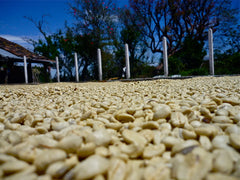 Parchment coffee on drying patio, Los Planes, El Salvador