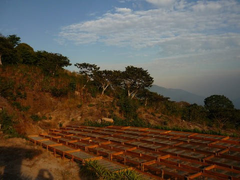 Solar driers raised coffee beds El Salvador