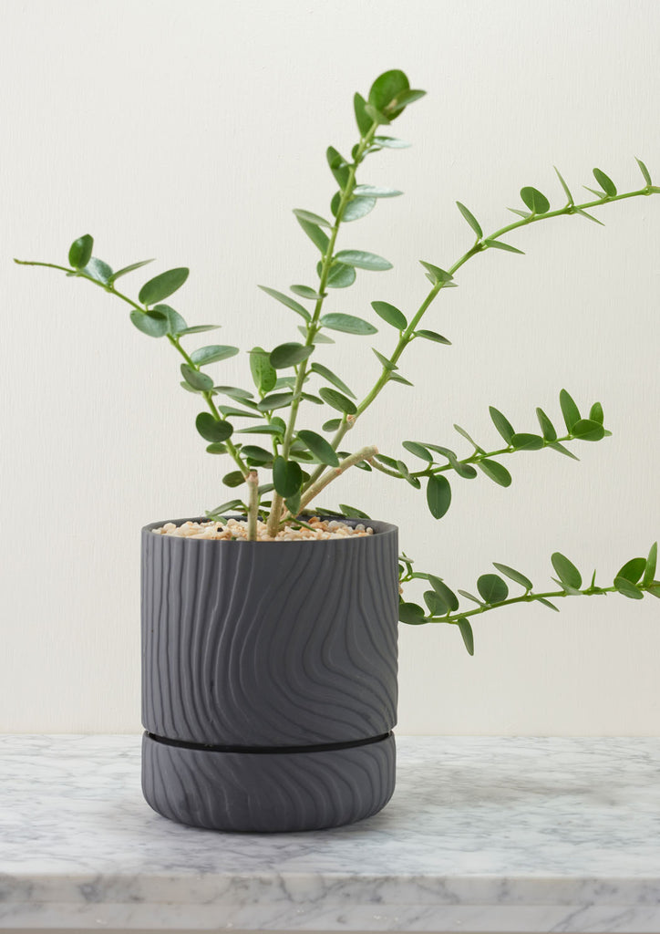 Angus & Celeste Abstract Relief Plant Pot - Brush Line Thin Charcoal