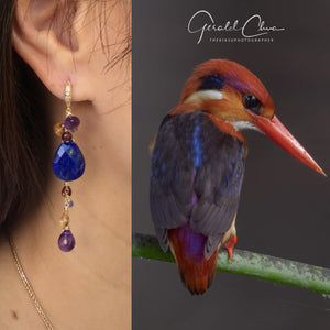 The Oriental Dwarf Kingfisher