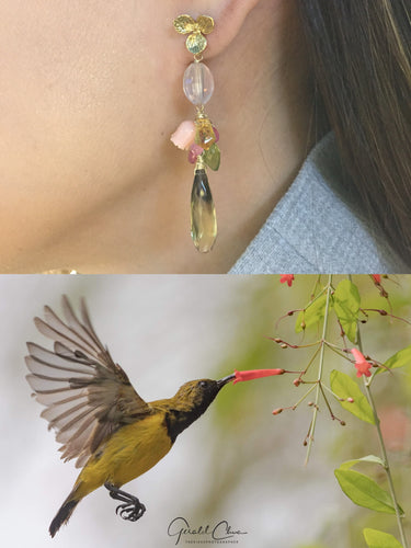 The Olive Backed Sunbird