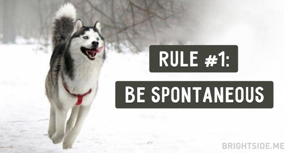 15 golden rules for life as told by husky dogs