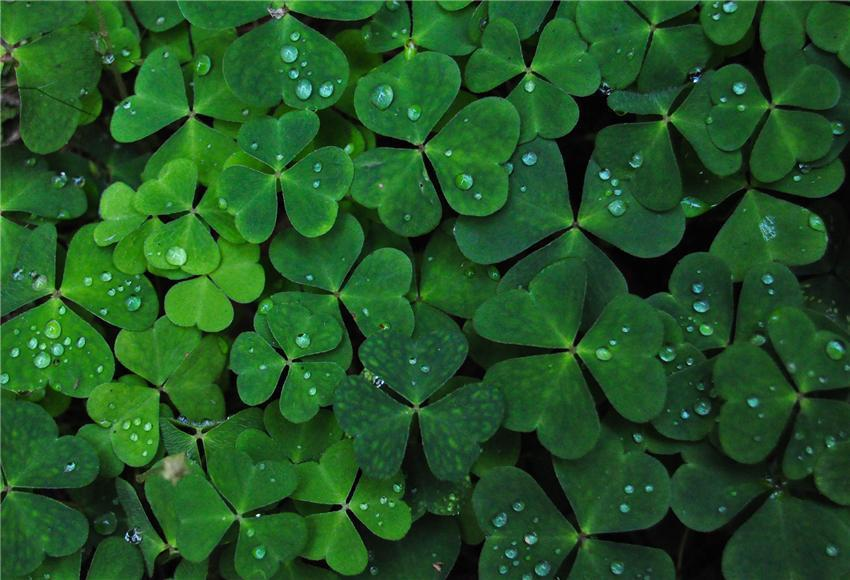 St. Patrick's Day Leaves Photo Booth Prop Backdrops