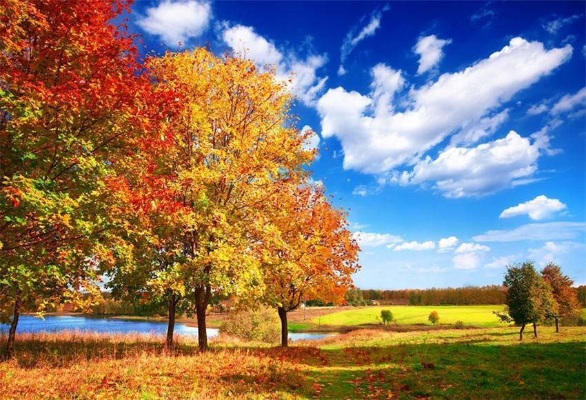 Autumn Red Maple Tree Blue Sky Photo Backdrops