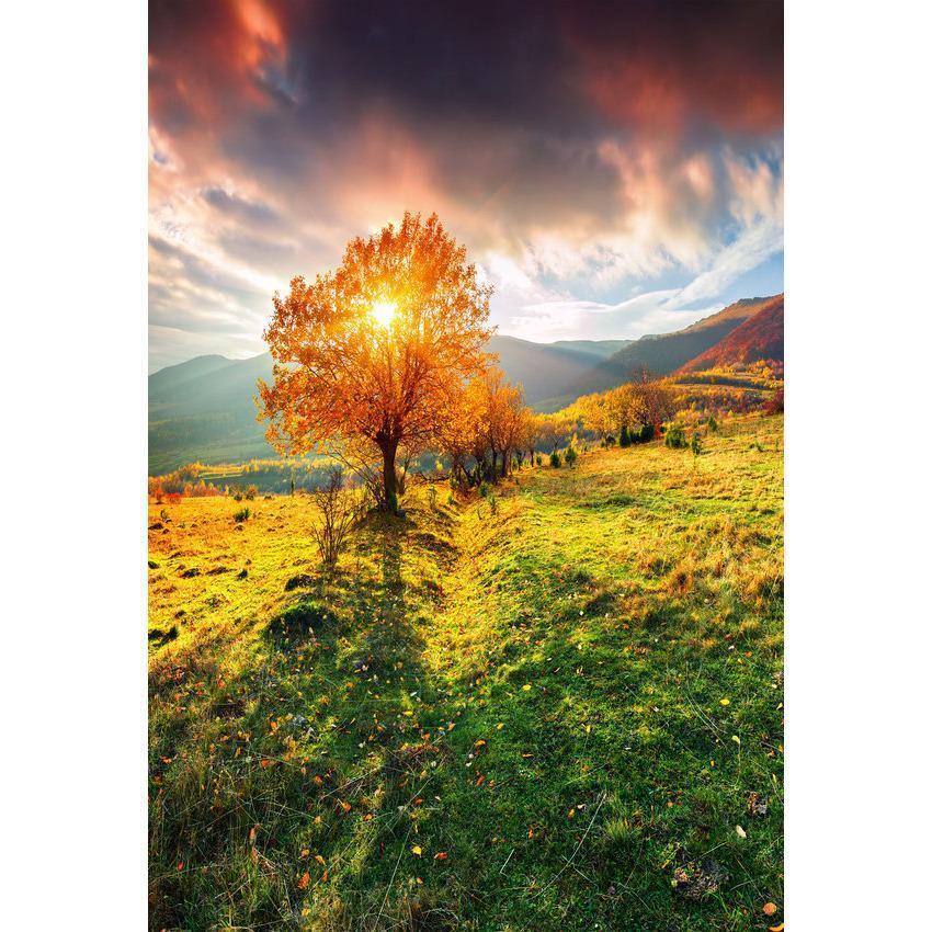 The Sunshine Through Tree Backdrop Beautiful Scenery Photography Background