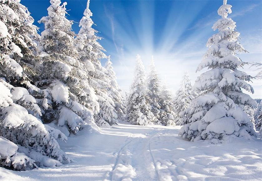 White Snow Forest Photography Backdrop Winter Background
