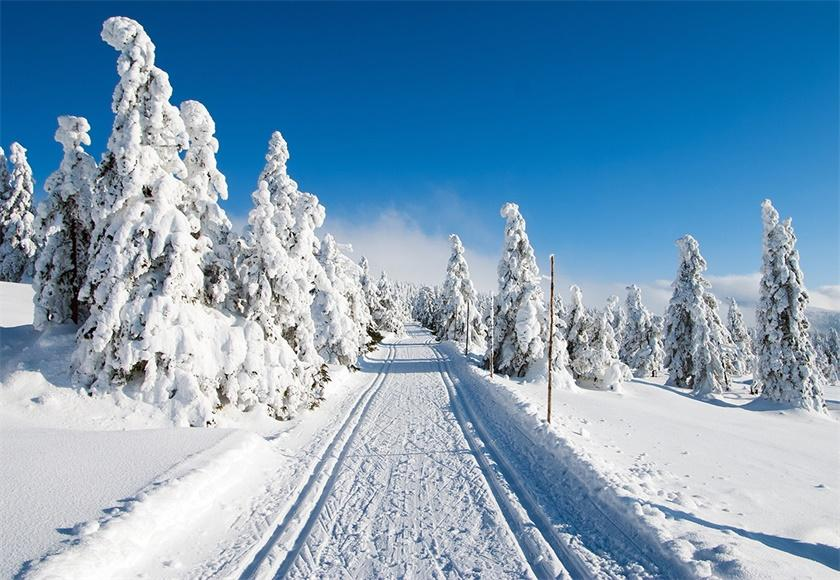 White Snow Cover Road Photo Backdrop Winter Background
