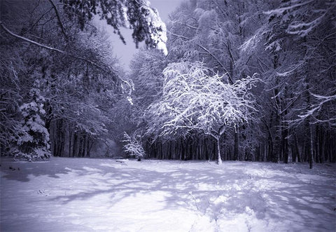 Night Snow Forest Photography Backdrop Winter Photo Background