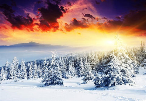Sunset Snow Forest Photography Backdrop Winter Background