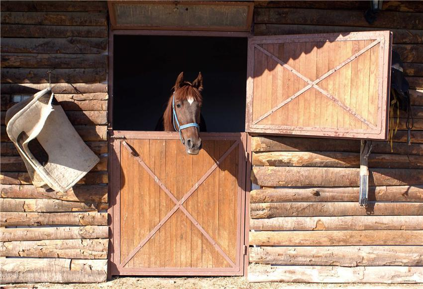 Race Stable Wooden Horse Sports Backdrops
