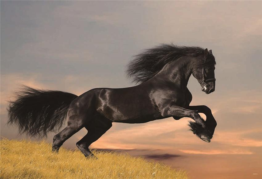 Black Horse Grassland Photography Backdrop