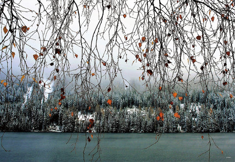 Autumn Winter Scenery Photography Backdrops