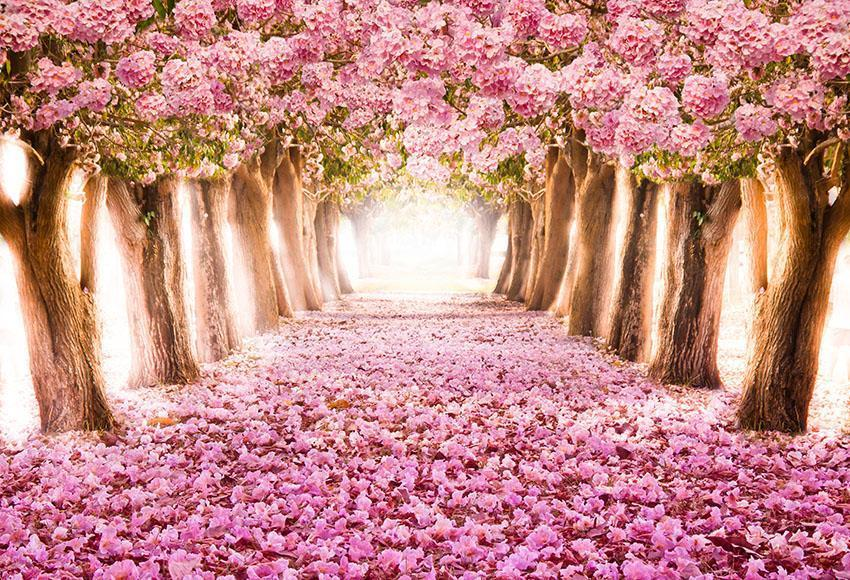 Romantic Pink Flowers Road Backdrop Intoxicating Photography Background