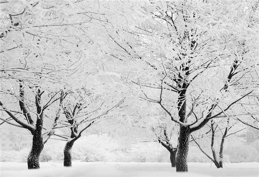 White Snow Tree Winter Photo Backdrop