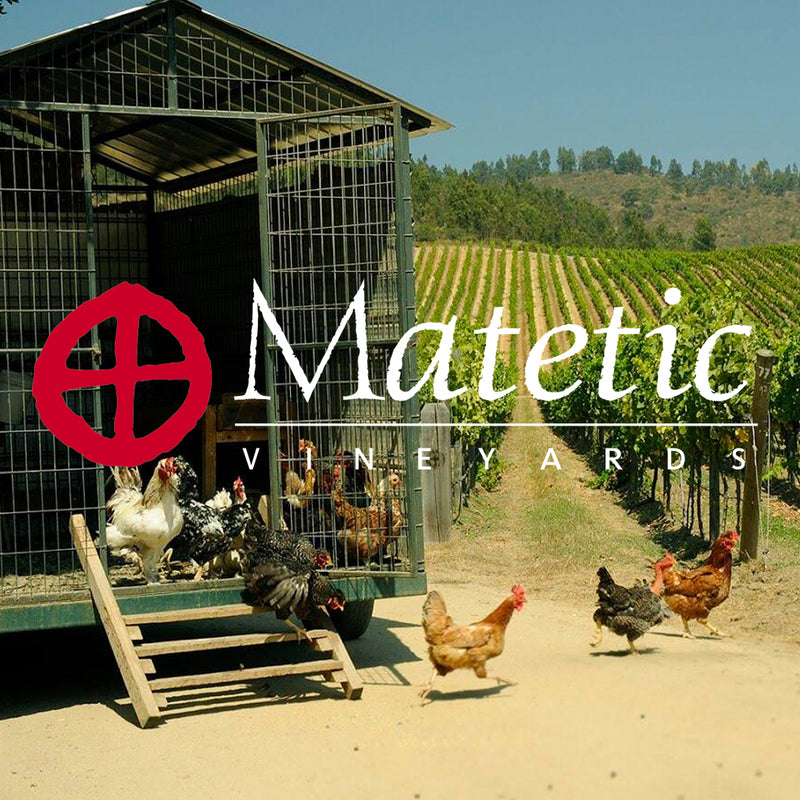 Matetic Vineyards - The Modern Face of Chilean Wine