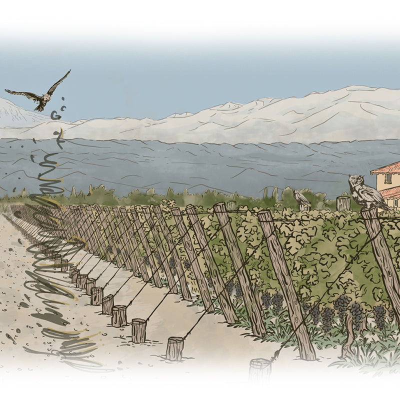 The Owl & The Dust Devil - Augmented Reality For Wine