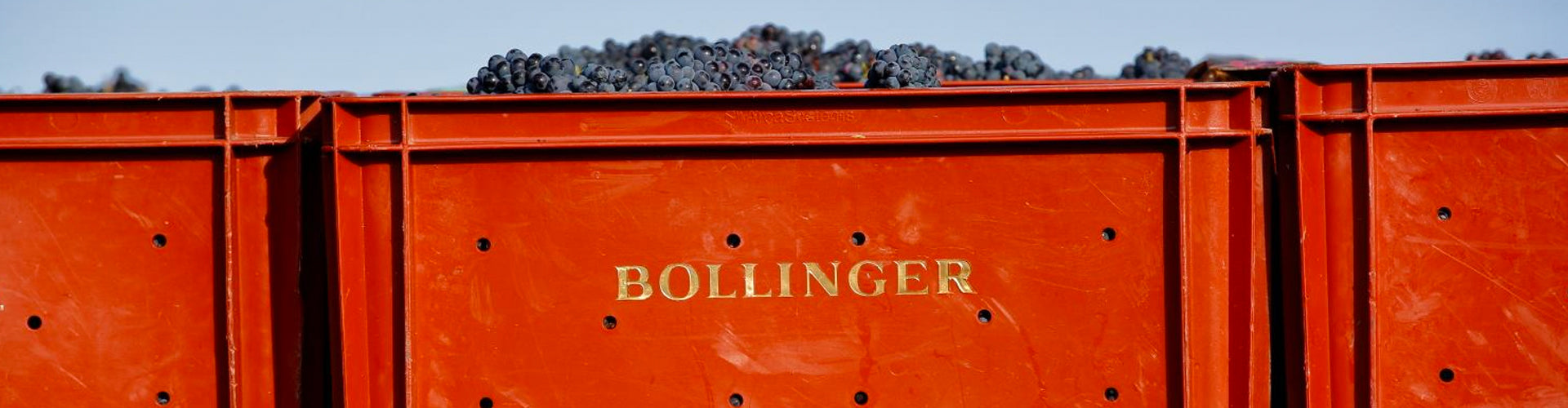 Champagne Bollinger Grapes in Picking Crates