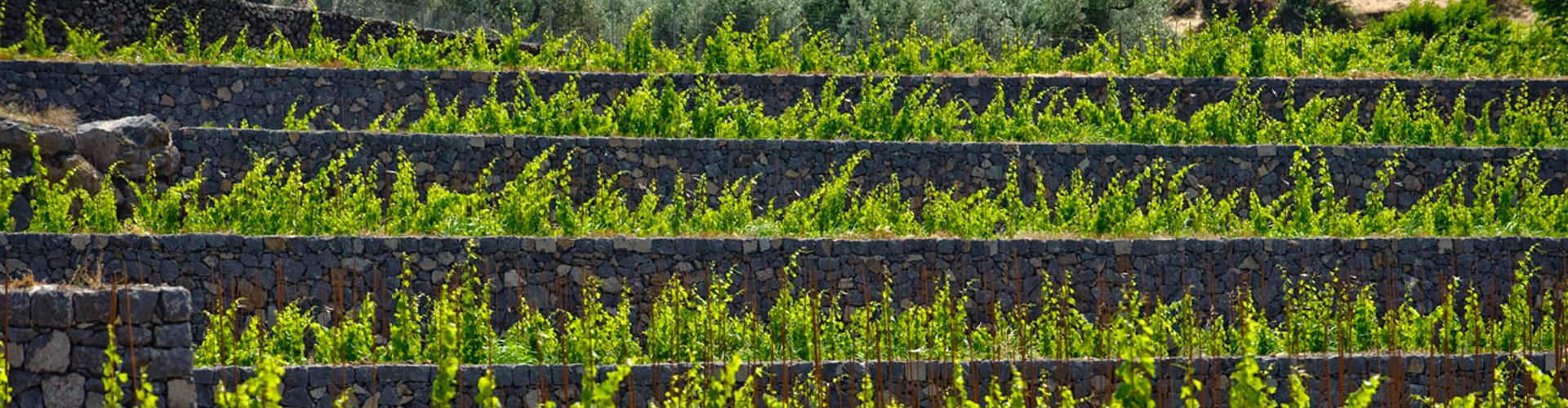 Pietradolce Vineyards Mount Etna