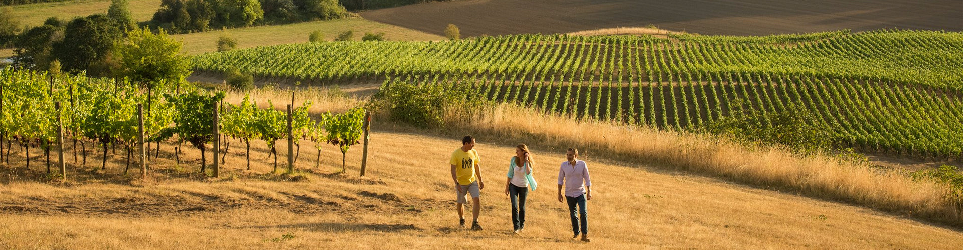 The Domaine Nicolas Jay Team Walking the Vineyards