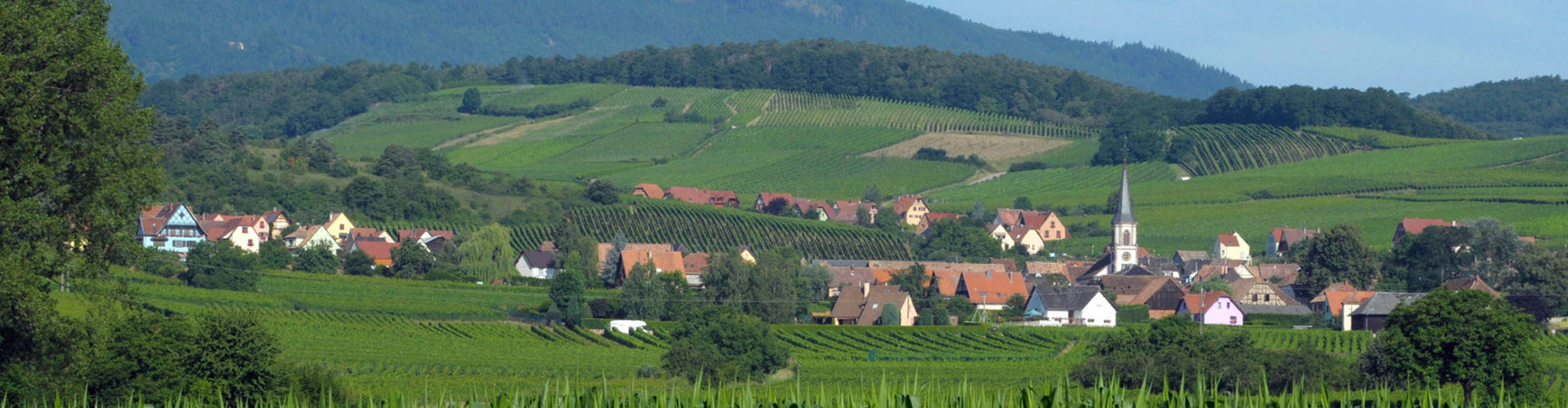 Vineyards in Rorschwihr, Alsace