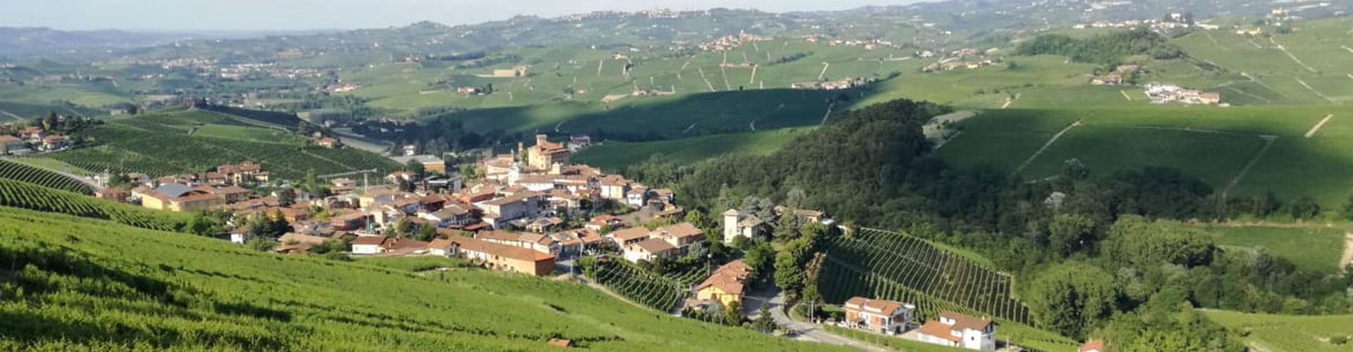 Umani Ronchi Vineyards in the Marche region of Italy