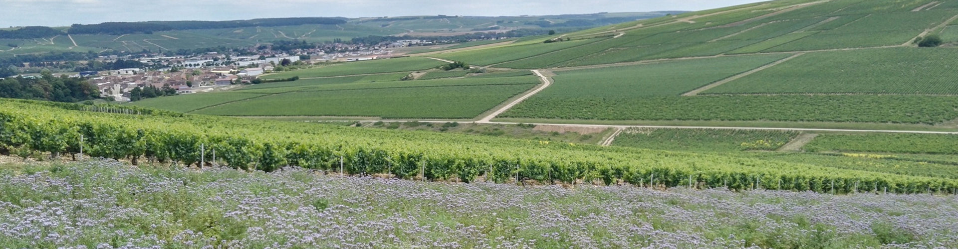 Domaine Sébastien Dampt Vineyards in Chablis