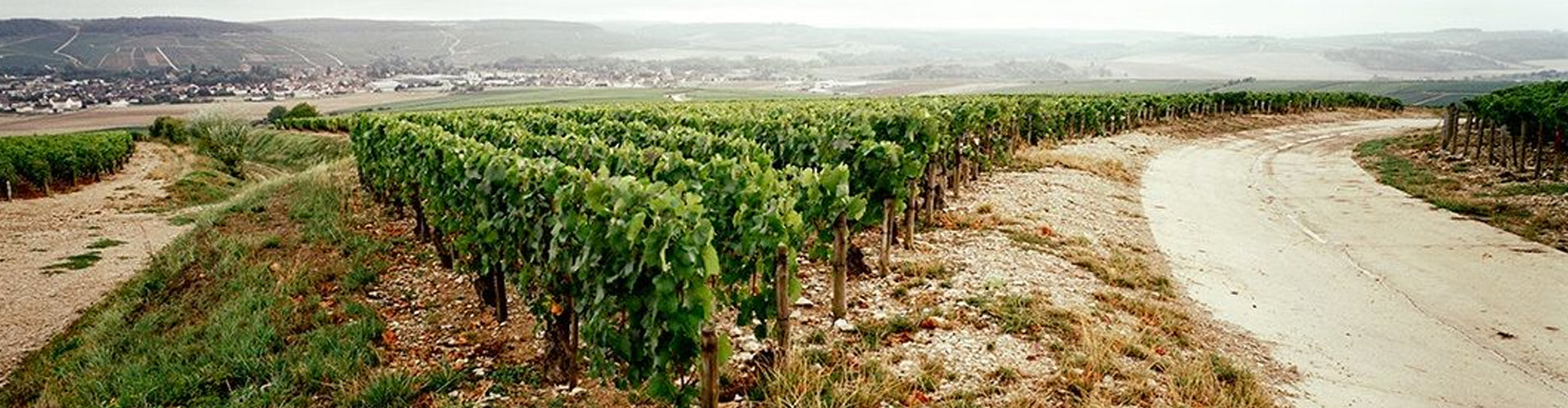 Chablis Vineyards in Burgundy, France
