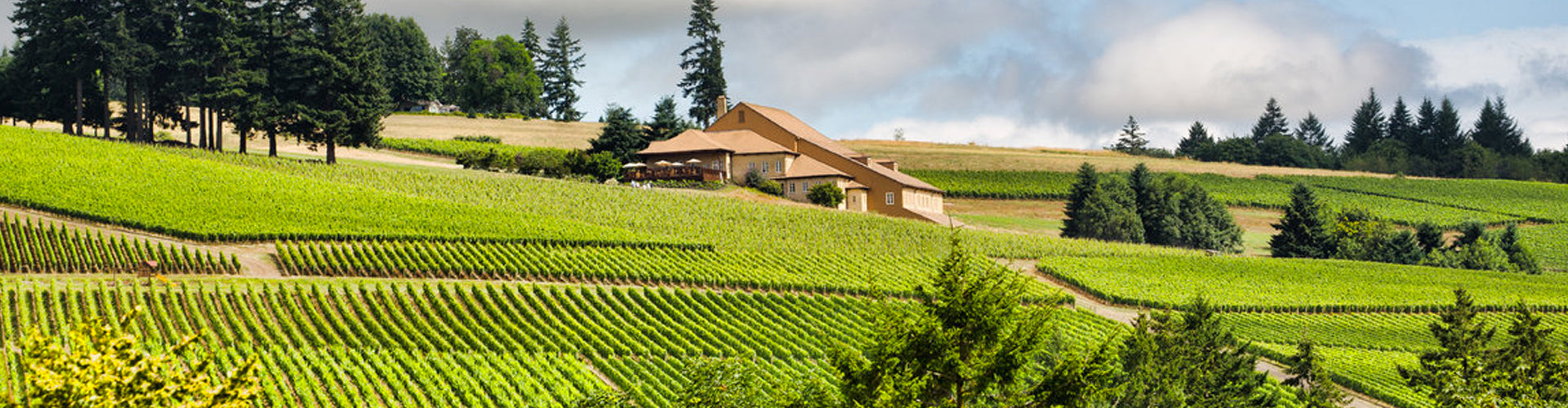 Domaine Drouhin Winery at Dundee Hills in Oregon