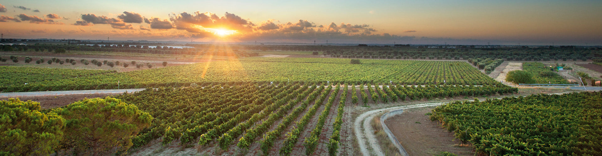 Cantele Vineyards in Puglia, Southern Italy